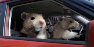 Hamsters(1)